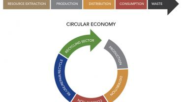linear vs circular economy