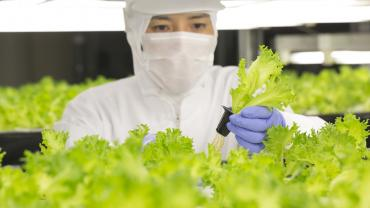 Image of a worker inspecting the produce at a vertical farm