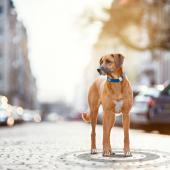 Tracking pets with smart collars